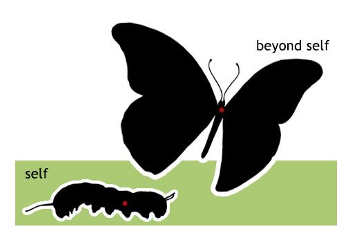 response-positions-catipillar-butterfly